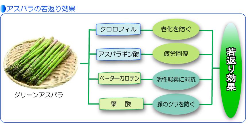 アスパラの栄養素と若返り効果表